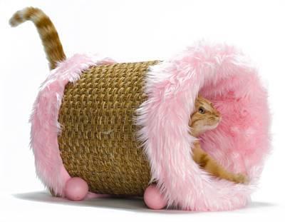 CAT NAP CATWHEEL ROZE #95;_42X29X29 CM